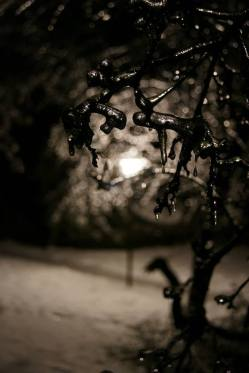 Frozen branches lit by lamplight